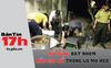 Bản tin 17h:Nổ súng bắt nhóm nấu cao hổ trong lò mổ heo