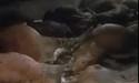 17 con bò nằm chết la liệt sau khi ăn xong