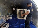 Máy bay hạ cánh khẩn vì cún mở cửa khoang hành lý