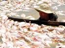 Đồng Nai hỗ trợ hơn 12 tỉ cho người nuôi cá bè