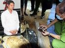 Xử vụ tàng trữ xác rùa biển: Liên tục gặp vướng