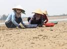 Chưa tìm ra nguyên nhân 120 ha ngao chết ở ven biển Hà Tĩnh