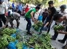 Sau Đồng Nai, người Sài Gòn ra tay cứu chuối Tây Ninh
