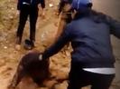 Mâu thuẫn trên facebook, nữ học sinh bị bạn đánh dã man