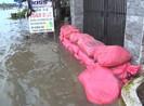 Triều cường gây thiệt hại 5,4 tỉ đồng ở Vĩnh Long