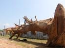 Vụ cây 'khủng': Đang chờ xác minh từ địa phương
