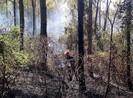 Hơn 200 người dập tắt rừng thông phát cháy