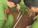 Tân Phú: Truy bắt hung thủ đâm chết thanh niên ở công viên
