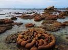 Tham quan Hòn Cau không được ảnh hưởng bãi đẻ rùa biển