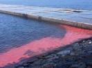 Bộ Tài nguyên kết luận vệt nước đỏ ở biển Kỳ Anh