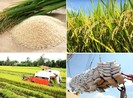 Chính phủ sẽ tạo môi trường thông thoáng cho hạt gạo