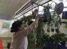 Khám phá lan rừng tại hội chợ quận Tân Bình