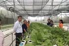 Rau thủy canh Meko-Farm, vì sức khỏe cộng đồng