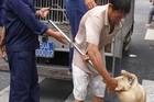 Bị phạt gần 32 triệu đồng vì nuôi chó thả rông