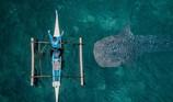 Khoảnh khắc cá mập voi bơi sát thuyền đánh cá gây sốt