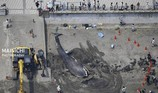 Cá voi xanh lần đầu tiên xuất hiện tại Nhật Bản