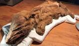 Khai quật xác ướp 2 sinh vật thời tiền sử 50.000 năm tuổi