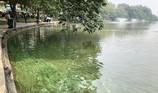 Tạo màu xanh cho nước hồ Gươm