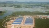 Trại heo khủng đe dọa nguồn nước đầu nguồn TP.HCM