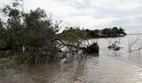 Cà Mau xin cơ chế mời DN xây kè tạo bãi trồng rừng ven biển