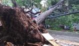 Sau cơn lốc, nhiều cây xanh ở Cần Thơ bị đổ ngã