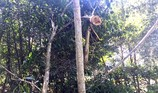 Rừng đặc dụng bị đốn hạ trái phép nhiều lần ngay TP Thanh Hóa