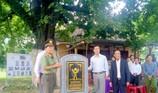3 cây thị trên 100 năm tuổi được công nhận cây di sản