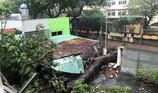Mưa bão hoành hành ở Vũng Tàu