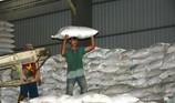 Gạo Việt trúng hợp đồng 'khủng' xuất sang Philippines