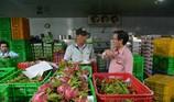 Thực hư thanh long ruột đỏ Đài Loan 500.000 đồng/kg