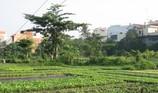 Hỗ trợ hơn 7 triệu đồng/m2 đất khu vườn rau Lộc Hưng