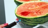 Ăn dưa hấu bị tiêm thuốc dễ gây ngộ độc, đột biến gen
