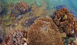 Tiếng kêu cứu của Khu bảo tồn Hòn Cau chưa dứt