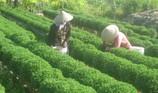 Checkin làng hoa Sa Đéc trước giờ trăm hoa đua nở