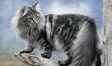 Đài Loan: Phản đối xây nghĩa địa vì loài mèo rừng