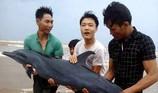 Dân cứu cá heo bị bão số 2 đánh dạt vào bờ