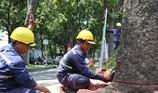 Đốn hạ, di dời 14 cây xanh trên đường Tôn Đức Thắng