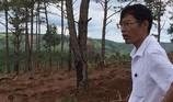 Chủ tịch xã bị bắt vì cho hạ rừng thông dọc quốc lộ