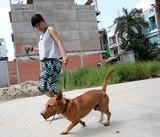 Những quy định người nuôi chó phải biết