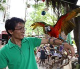 Trải nghiệm cà phê với vẹt 5.000 USD ở Sài Gòn