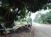 Vụ người thu gom mì mót chết: Chủ tịch tỉnh chờ nghe báo cáo