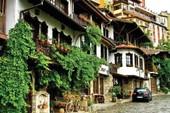Những đóa hồng lặng lẽ ở Bulgaria