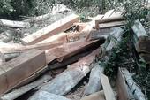Lâm tặc hủy hoại rừng như thế nào