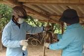 Khẩn trương dập dịch cúm gia cầm ở Quảng Ngãi