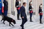 Nước Pháp có 'đệ nhất khuyển'