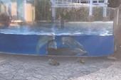 Bầy cá heo tụ tập 'làm quen' với sóc