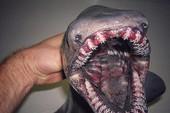 Bắt được cá mập thời tiền sử có 300 chiếc răng
