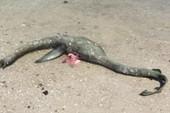 Quái vật hồ Loch Ness qua đời?