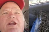 Kinh hãi sống chung với hàng ngàn con ong trong cabin xe