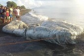 Phát hiện xác thủy quái kỳ dị ở bờ biển Philippines